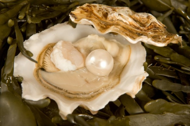inspiring talk radio kvec - Deal with Problems. Oyster reveals how you can work with a problem and transform it into a pearl. Watch inspiring video from #talkradio host Bob Garner