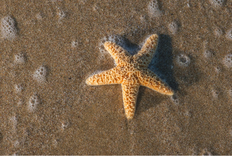 While mission of charity is huge, smallest act of kindness counts as story of little boy and starfish proves. Charities & non-profits need help. Inspiring talk radio.